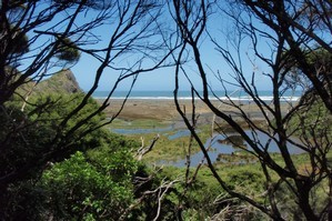 The Buck Taylor Track, part of the Hillary Trail through the Waitakere Ranges. Photo / Supplied