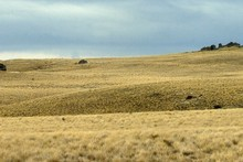 Site of proposed Project Hayes windfarm. Photo / Craig Baxter, Otago Daily Times