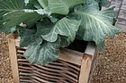 Raised beds can be as decorative or as inexpensive as you want, just make sure plant roots don't dry out in the hot summer days to come. Photo / Supplied