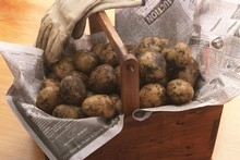 Start planting now for potatoes in your own backyard. Photo / Neville Marriner