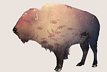 <i>Buffalo</i> by The Phoenix Foundation is a finalist in Best Album Cover. Image/ Supplied