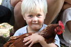 Emma Charlesworth says keeping chickens is a great help with her family finances.  Photo / Natalie Slade