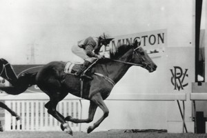 Kiwi finished first in the Melbourne Cup at Flemington 1 November 1983. Photo / Supplied