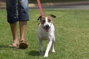 Though these parks are leash-free, make sure you carry a leash with you and be prepared to re-leash the minute you spot trouble coming. Photo / Thinkstock