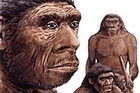 Earlier this year, three Neanderthal females had their genomes sequenced to produce the first draft of the Neanderthal genome.