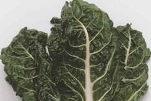 Silverbeet is flourishing. Photo / Supplied