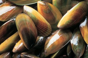 Mussels will keep in the fridge for two days in the right conditions. Photo / Supplied