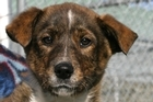 People with pets missing for more than 24 hours should call SPCA Track-A-Pet line on 0900 56-787. Photo / Christchurch Star