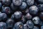 Blueberries generally prefer the cold, but some varieties are less fussy. Photo / Thinkstock