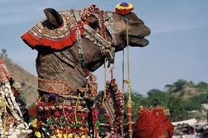 All the fun of the fair at Pushkar. Photo / Dennis Richardson