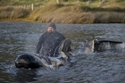 Volunteers last night comforted whales that had been moved to a nearby stream. Photo / Richard Robinson