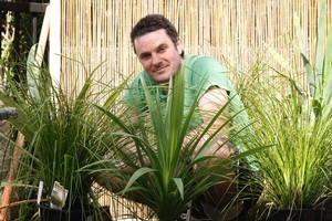 Grasses and Cordylines are high impact plants that withstand a good deal of wear and tear. Photo / Richard Robinson