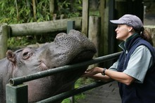 Snorkel the hippopotamus pictured with keeper Sandra Rice in 2005. Photo / The Aucklander