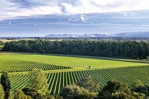 The site of the new Gisborne Food and Wine Festival. Photo / Supplied