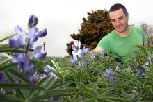 Justin Newcombe with a garden of lupins growing at Waterview Primary School. Photo / Dean Purcell