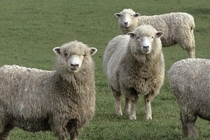 The highest jump was in wool prices, up 12 per cent to a 14-year high. Photo / NZ Herald