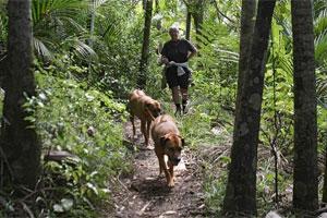 Piha offers walking tracks through native bush. Photo / Bruce Nicholson