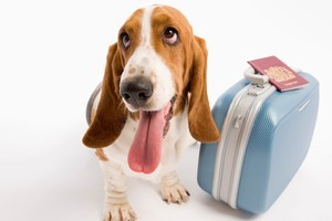 Travelling pets aren't likely to be cleared by customs quickly. Photo / Thinkstock