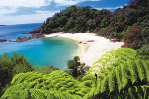 The Tutukaka Coast has been named one of the top coastlines in the world by National Geographic Traveler magazine. Photo / Supplied