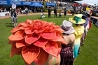 Even though the New Zealand Cup and Show Week is an annual sporting event fashionstas will get a chance to show of winning ensembles at the show. Photo / Simon Baker
