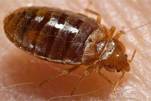 Bed bug infestations helped put some hotels on TripAdvisor's lists of the world's dirtiest hotels.