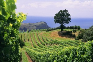 Man O' War Vineyard, Waiheke Island. Photo / Supplied