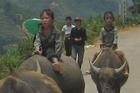 Local children riding water buffalo in Sapa, Vietnam. Photo / Rob McFarland