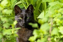 Create ways to distract pets from the edible garden. Photo / Thinkstock