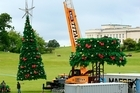 A Christmas tree nearly 20m tall is assembled and lifted into place by a crane in the Auckland Domain. Photo / Martin Sykes