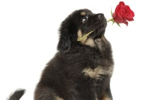 It's the thought that counts. Photo / Thinkstock