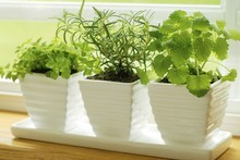 Potted herbs could spice up the season as a gift worth giving. Photo / Thinkstock