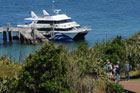 The 360 Discovery ferry at Tiritiri Matangi wharf. Photo / Liz Light