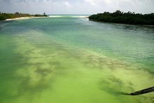The Sian Ka'an Biosphere Reserve on the Yucatan Peninsula is a Noah's Ark of southern Mexico's flora and fauna. Photo / Wikimedia Commons image by Tim Gage