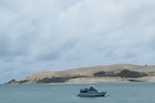 The flounder-rich Hokianga harbour with its famous sandhills. Photo / Supplied
