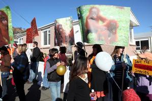 Cadbury's use of palm oil in chocolate drew vocal protests. Photo / Otago Daily Times
