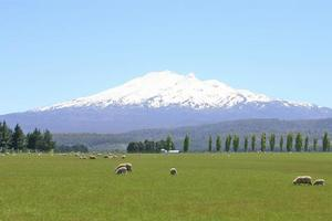 Spectacular views of Ruapehu can be seen from the cobblestoned trail of the Ohakune Old Coach Road. Photo / Jim Eagles