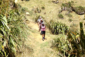 A gentle grassy descent makes Te Henga Walkway the most popular part of the trail for old and young alike. Photo / Natalie Slade