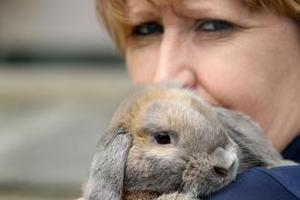 SPCA inspector Vicki Border with the rabbit who was rescued by police. Photo / Natalie Slade