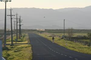 A feasibility study  is still under way into the Hauraki Plains cycleway. Photo / Glenn Jeffrey
