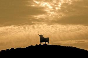 A bull on a hill in Spain. Photo / Jacqueline Gilbert