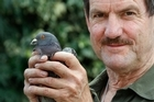 Veterinarian Ross Blanks with the pigeon that was found after five days. Photo / Brett Phibbs