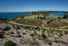 Rotoroa Island in the Hauraki Gulf was once used for drug and alcohol rehabilitation. Photo / Richard Robinson 