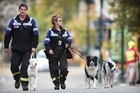 Christchurch doghandlers Tim Drennan, with Boo, and Brenda Woolley, with Boss and Keepa. Photo / Greg Bowker