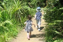 The Auckland City Walk through the Cascade Kauri area is just 1.5km long. Photo / Supplied