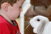 Oscar McEvoy, 3, plays with the animals at Butterfly Creek. Photo / Steven McNicholl
