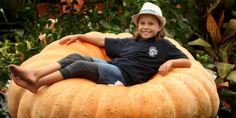 Ella Gordon-Scapens, aged 8, gets comfy on the giant pumpkin. Photo / Alan Gibson