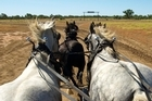 Go For a Gallop With Richard at Longreach, Queensland. Photo / Pamela Wade