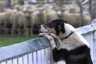 The Regulatory Standards Bill is a bit of a dog, no matter how it tries to present itself. Photo / Alan Gibson