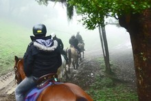 Horse trekking through the area. Photo / Supplied