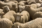 Wool prices have doubled in the past year. Photo / Paul Estcourt